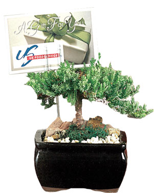 want to put a colorful plant on an office desk that needs little care attention and sunlight bonsai trees are an ideal way to give that friendly and bonsai tree office table